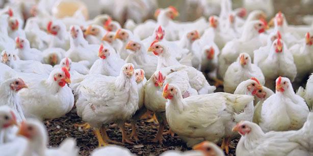 В Крыму построят птицеводческий комплекс