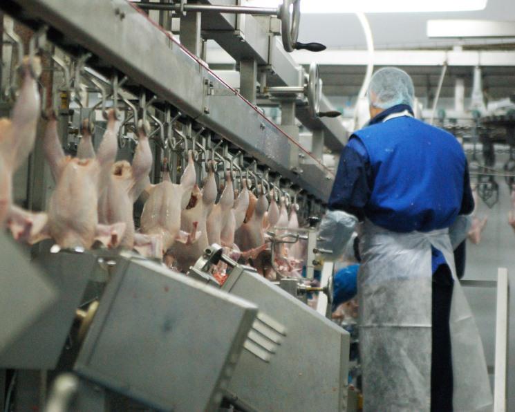 Регионы-лидеры снижают объемы производства птицы