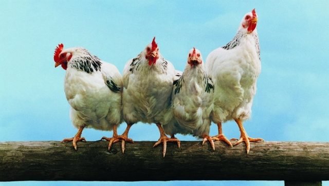 В первом полугодии производство мяса в Ростовской области сократилось на 42%