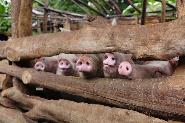 Эпизоотическая ситуация по особо опасным болезням животных в мире с 11 по 17 июля 2020 года