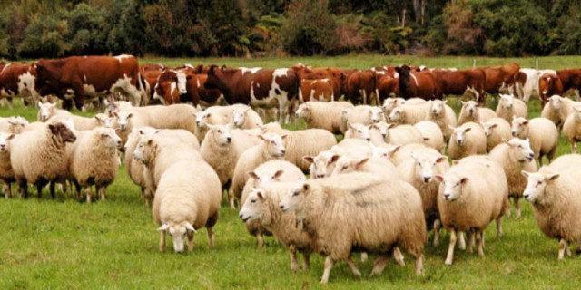 Животноводческая отрасль России обеспечена грубыми и сочными кормами на 107,2%